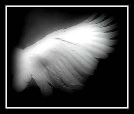 Angel Wing~