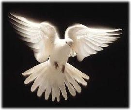 dove.67183747_std